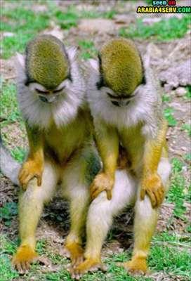 صور توأم الحيوانات 3909811946.jpg