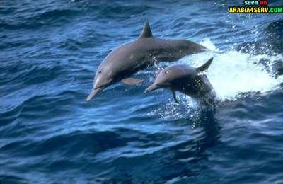 صور توأم الحيوانات 3909811947.jpg