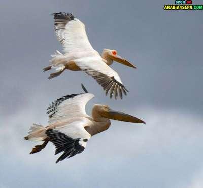 صور توأم الحيوانات 3909811948.jpg