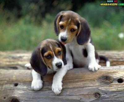 صور توأم الحيوانات 3909811949.jpg