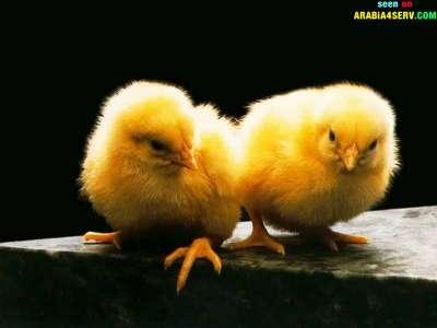 صور توأم الحيوانات 3909811950.jpg