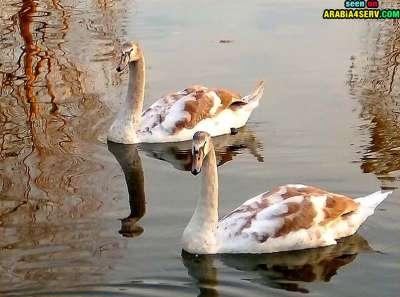 صور توأم الحيوانات 3909811951.jpg