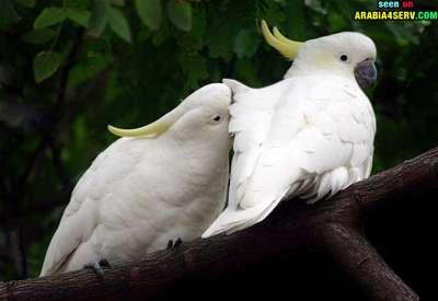 صور توأم الحيوانات 3909811952.jpg