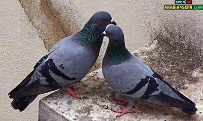 صور توأم الحيوانات 3909811953.jpg