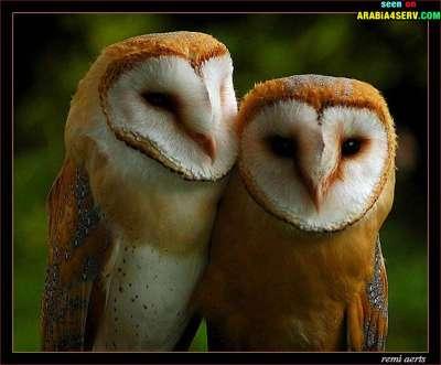 صور توأم الحيوانات 3909811954.jpg