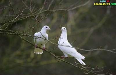 صور توأم الحيوانات 3909811956.jpg