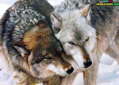 صور توأم الحيوانات 3909811957.jpg