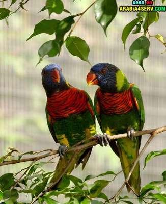 صور توأم الحيوانات 3909811958.jpg