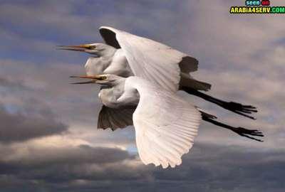 صور توأم الحيوانات 3909811959.jpg