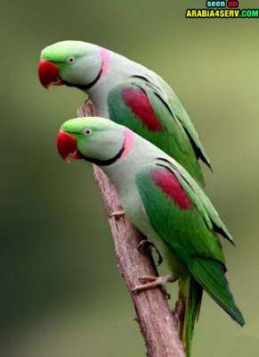 صور توأم الحيوانات 3909811961.jpg