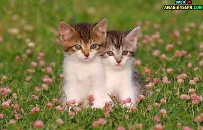 صور توأم الحيوانات 3909811964.jpg