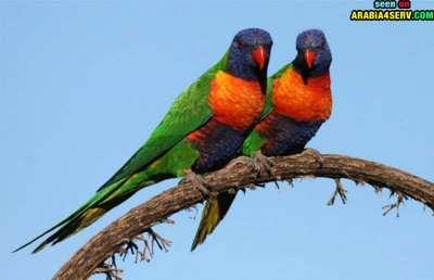 صور توأم الحيوانات 3909811965.jpg