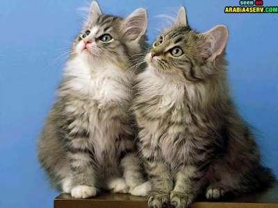صور توأم الحيوانات 3909811966.jpg