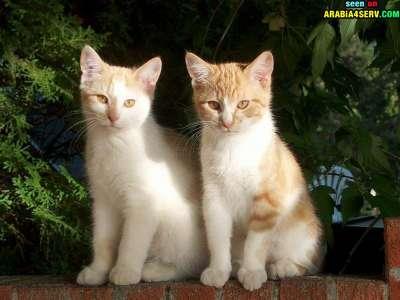 صور توأم الحيوانات 3909811968.jpg