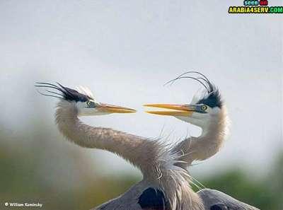 صور توأم الحيوانات 3909811969.jpg