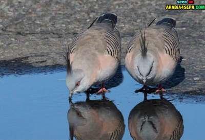 صور توأم الحيوانات 3909811971.jpg