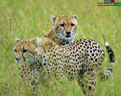 صور توأم الحيوانات 3909811972.jpg