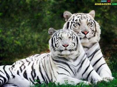 صور توأم الحيوانات 3909811973.jpg