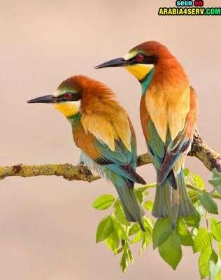 صور توأم الحيوانات 3909811975.jpg