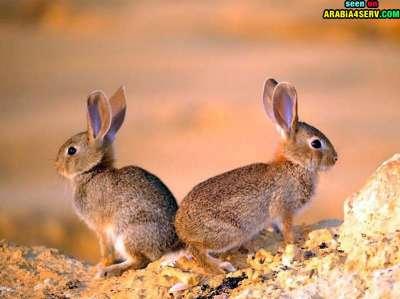 صور توأم الحيوانات 3909811976.jpg
