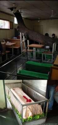 صور مطعم في الهند بين الاموات و الاكفان 3909812809.jpg