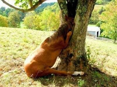 عندما يخجل الحيوان. 3909815036.jpg