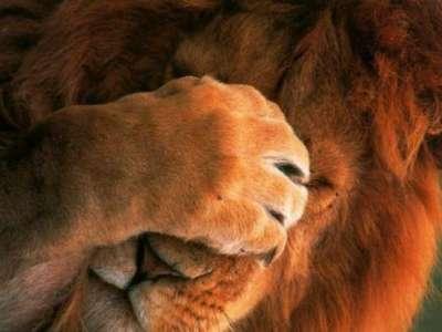 عندما يخجل الحيوان. 3909815038.jpg