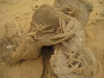 ورود في صحراء السعودية..معلومات وصور