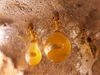 العسل 3909819505.jpg