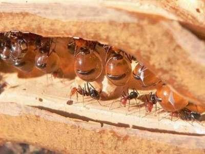 العسل 3909819506.jpg