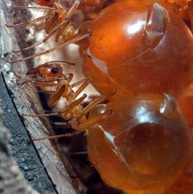 العسل 3909819508.jpg