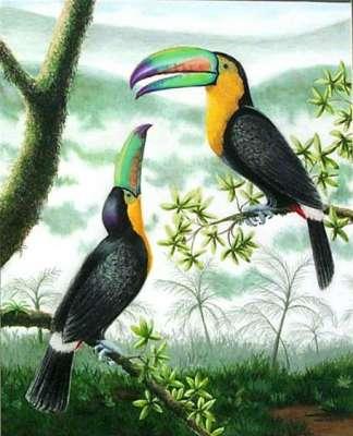 طيور الطوقان 3909823908.jpg