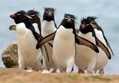 صـور ساحـرة لأروع الحيوانـــات 3909826635.jpg