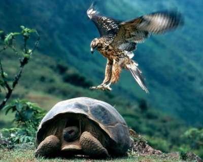 صـور ساحـرة لأروع الحيوانـــات 3909826640.jpg
