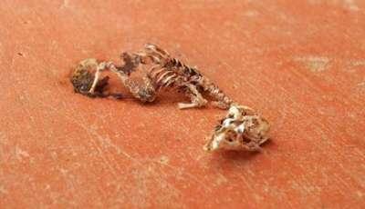 شاهد ماذا النمل بجثة