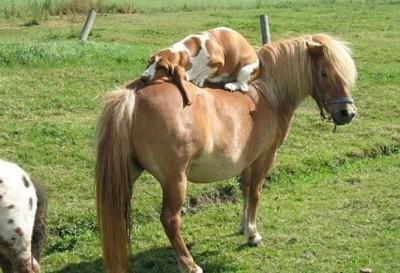 أطرف الحيوانات المضحكة لعام 2012 3909863670.jpg
