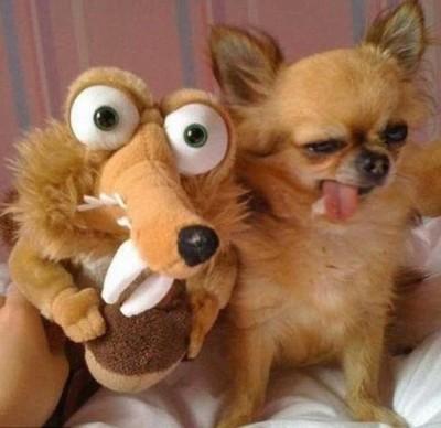 أطرف الحيوانات المضحكة لعام 2012 3909863678.jpg