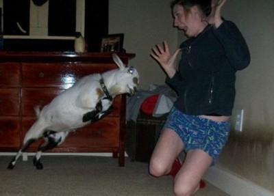 أطرف الحيوانات المضحكة لعام 2012 3909863681.jpg