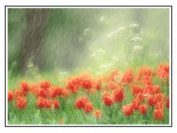 لأجمل لقطات وصور قطرات المطر تداعب الطبيعه للعام 2013 3909871007.jpg
