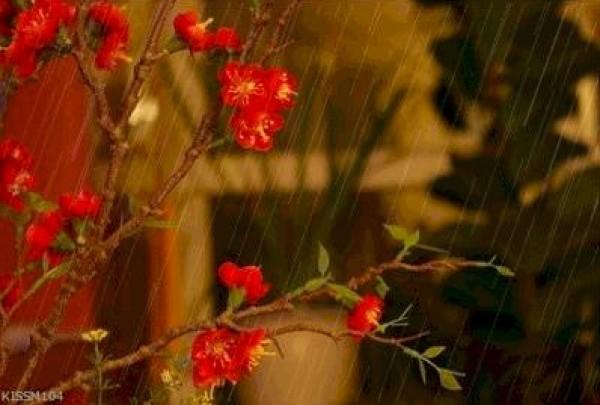 لأجمل لقطات وصور قطرات المطر تداعب الطبيعه للعام 2013 3909871008.jpg
