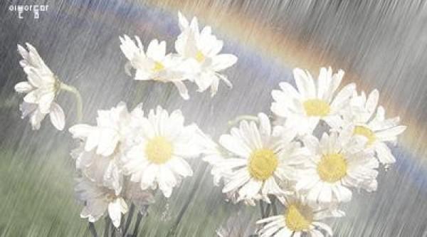 لأجمل لقطات وصور قطرات المطر تداعب الطبيعه للعام 2013 3909871009.jpg