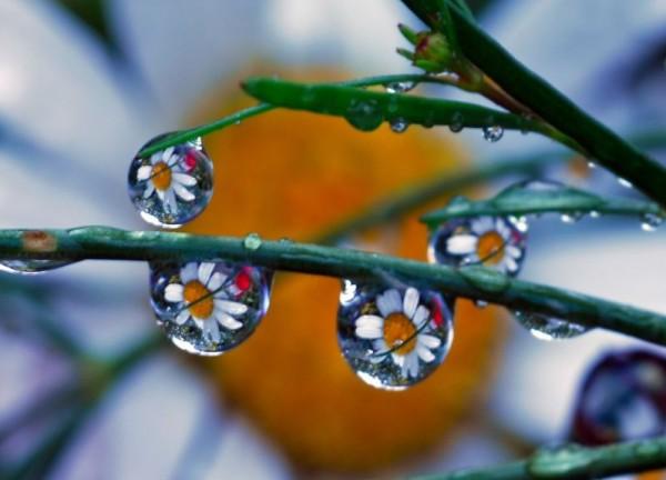 لأجمل لقطات وصور قطرات المطر تداعب الطبيعه للعام 2013 3909871010.jpg