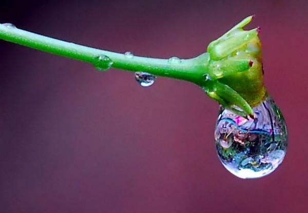 لأجمل لقطات وصور قطرات المطر تداعب الطبيعه للعام 2013 3909871014.jpg