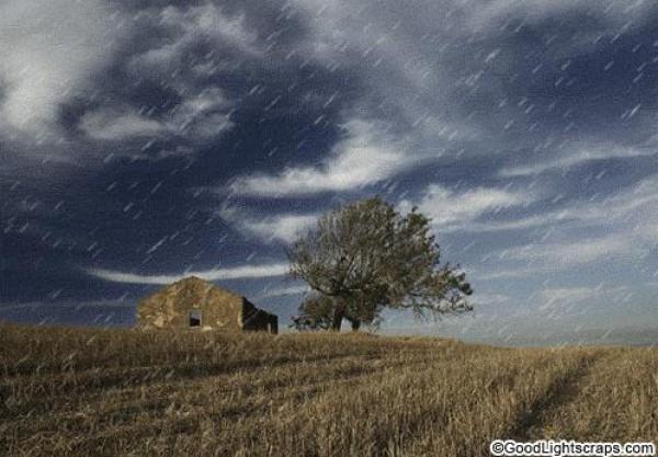 لأجمل لقطات وصور قطرات المطر تداعب الطبيعه للعام 2013 3909871020.jpg
