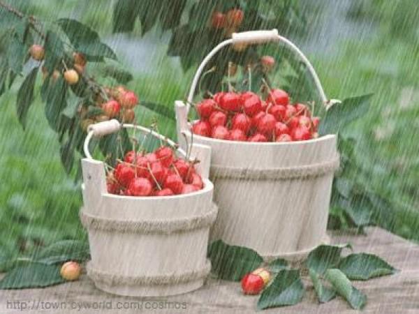 لأجمل لقطات وصور قطرات المطر تداعب الطبيعه للعام 2013 3909871021.jpg