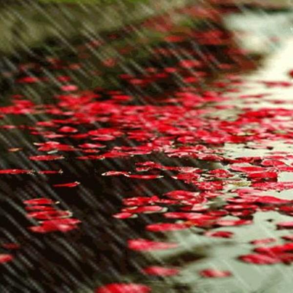 لأجمل لقطات وصور قطرات المطر تداعب الطبيعه للعام 2013 3909871023.jpg