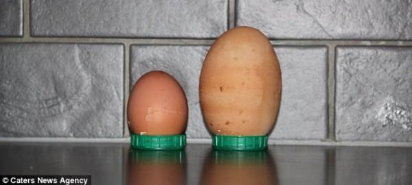 عجائب الطبيعة بيضة داخل بيضة