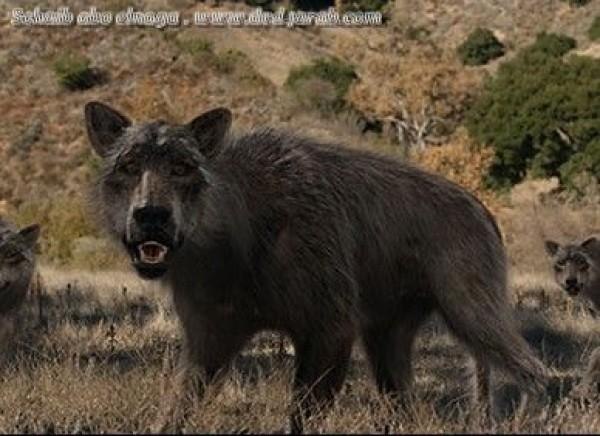 من حيوانات المنقرضة .. الذئب الرهيب
