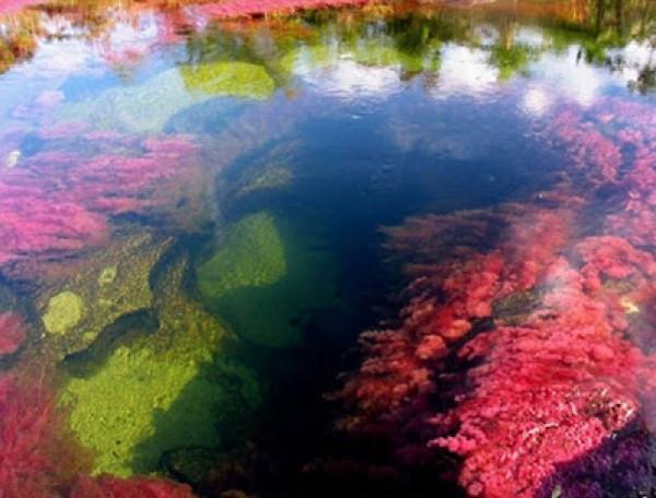 نهر الألوان الخمسة ( أجمل أنهار العالم ) 3909886639.jpg