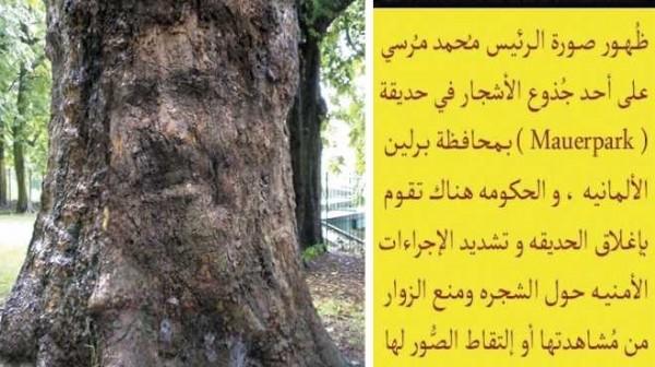 صورة مرسي تظهر على شجرة في المانيا 3909892157